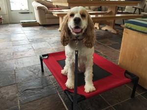 Trained Dog Dog mitzi on place